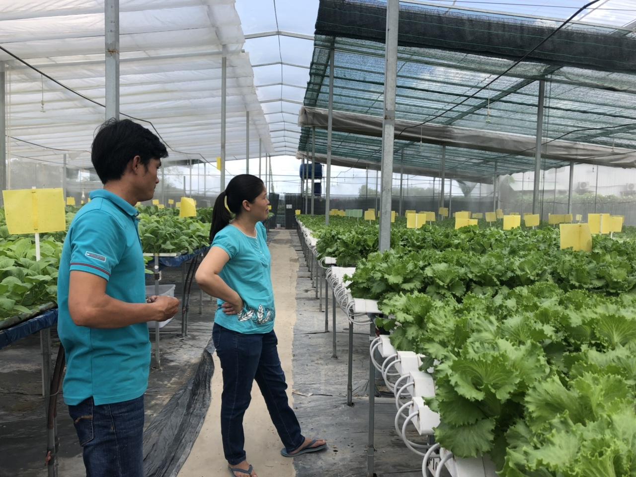 rau xanh trồng tại vườn SaDoNa